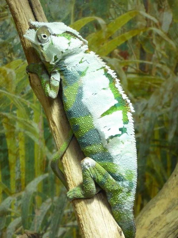 kameleon_Alligator_Bay