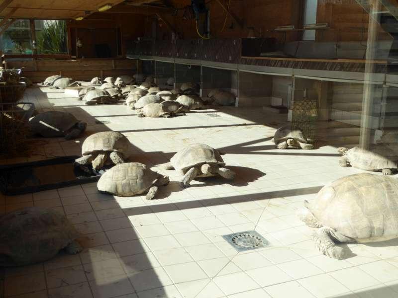 schildpadden_Alligator_Bay