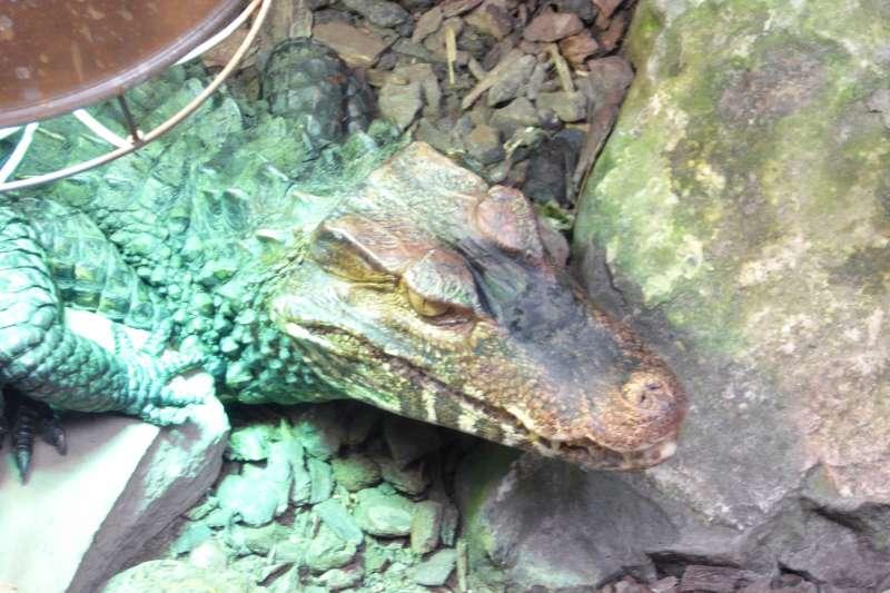 Kaaiman Berkenhof Tropical Zoo