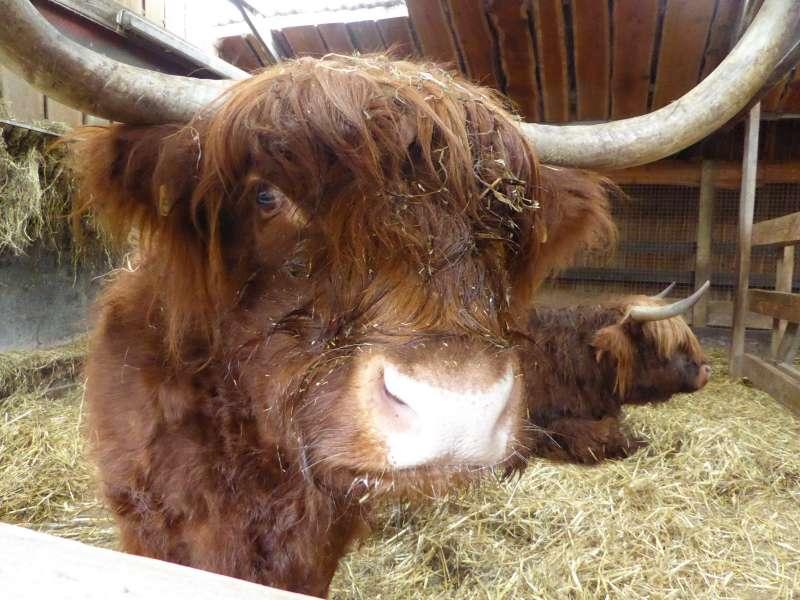 Buffel Zonnegloed