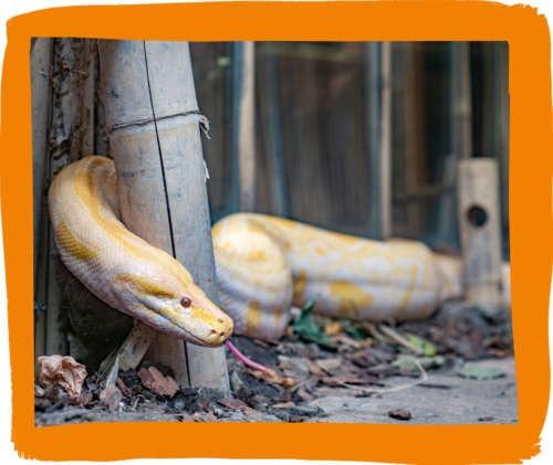 Dierenpark Almere Jungle
