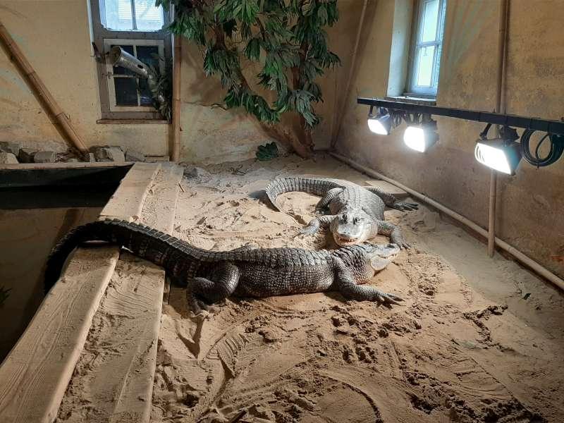 krokodil Dierenpark De Oliemeulen