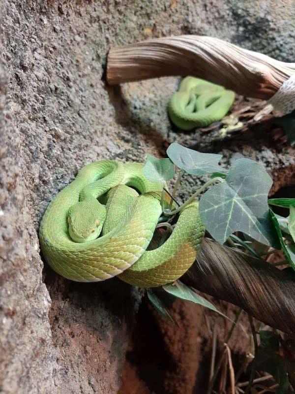 slang Dierenpark De Oliemeulen