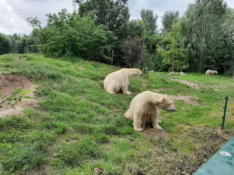 ijsberen Dierenrijk