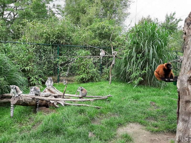 lemuren Dierenrijk