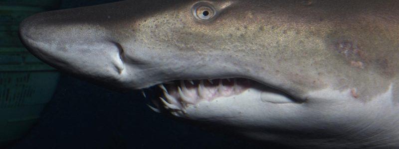 Aquarium de Saint-Malo shark