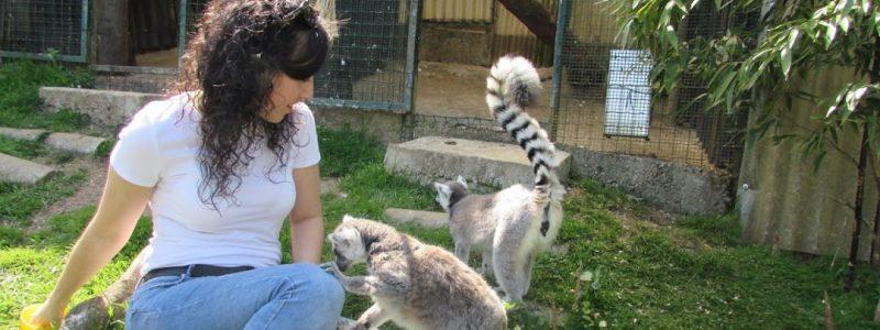 El Bosque Zoologico