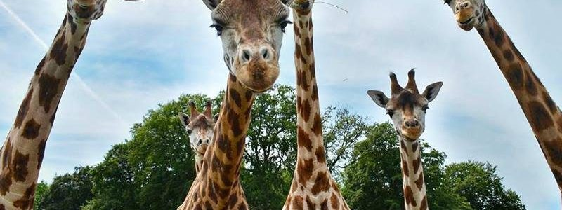 Knuthenborg Safaripark Limpopoland