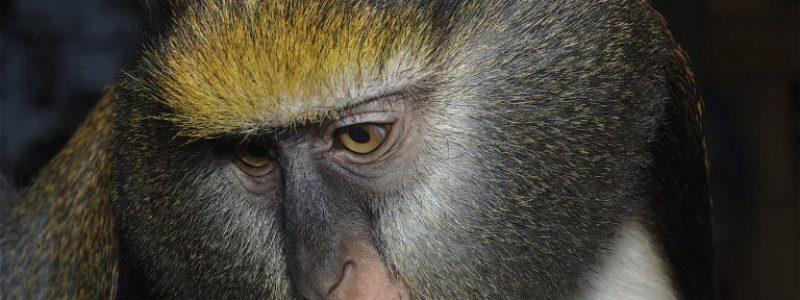 Monkey Farm Tenerife