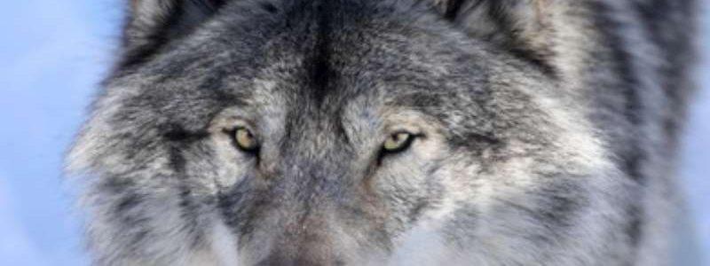 Parc Alpha (Alpha Loups)