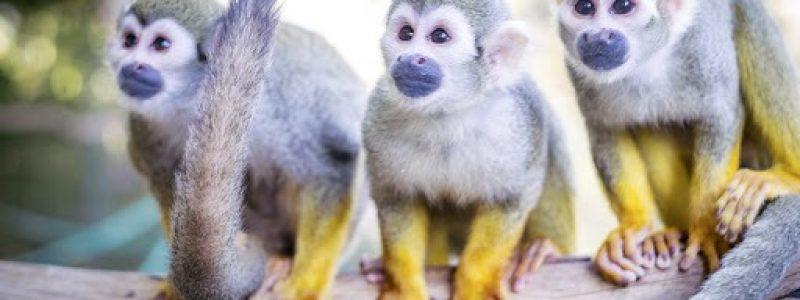 Tropical Zoo jardin zoologique de la Londe