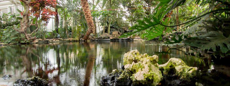 Vlindertuin Kleine Costa Rica