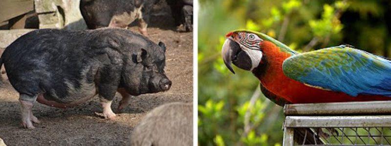 Vogel - und Tierpark Abensberg
