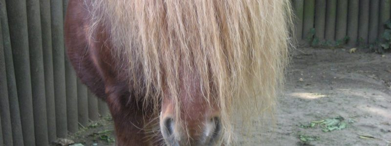 Zoo Duisburg horse