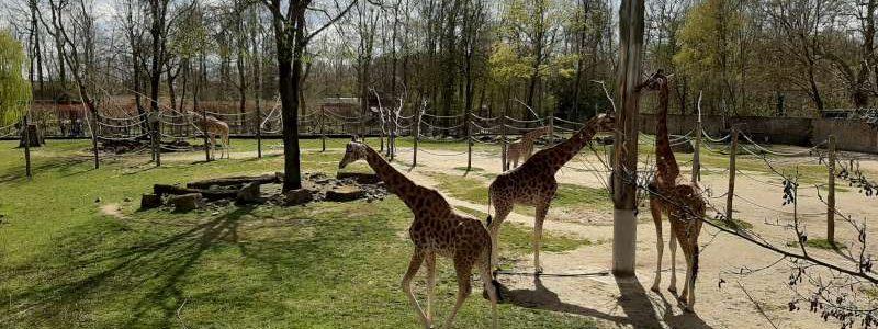 Zoo Planckendael Belgium