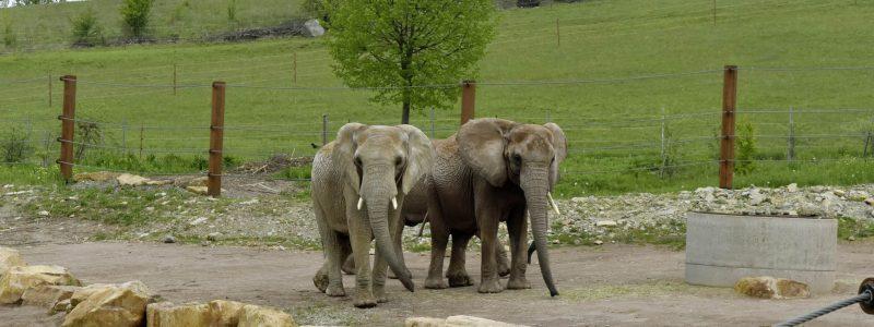 Zoopark Erfurt
