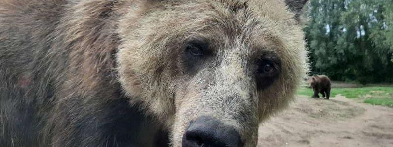 beer Dierenrijk