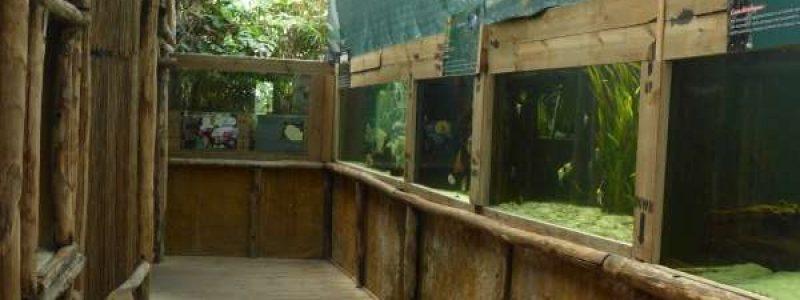 tropisch_2_Aquarium_dAmneville_2