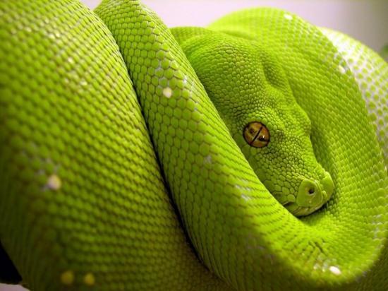 La Ferme des Reptiles serpent