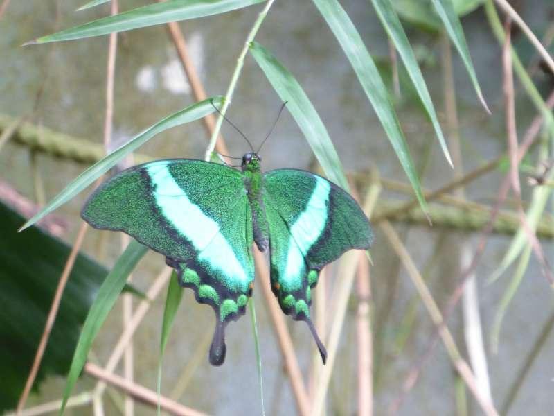 groene_vlinder_Naturospace