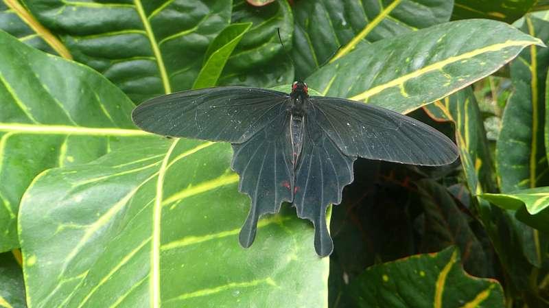 vlinders_Naturospace