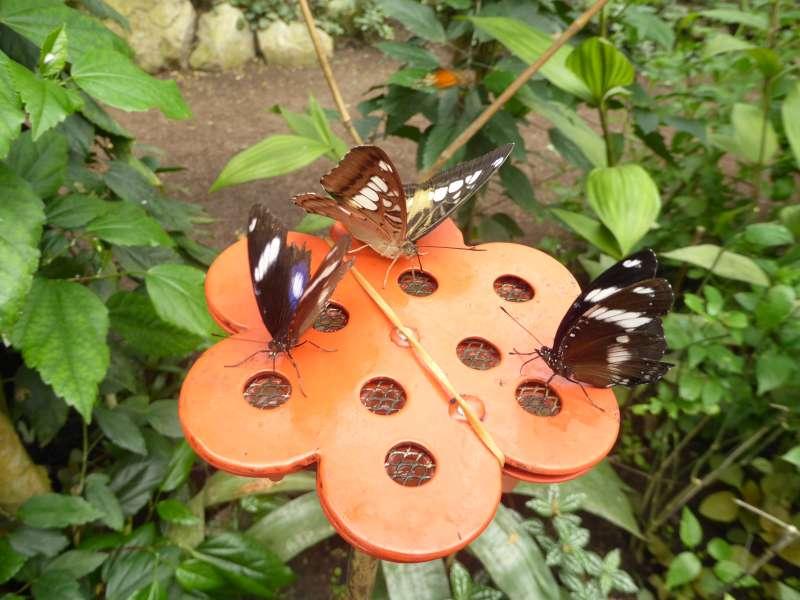 vlinders_eten_Naturospace