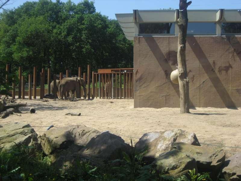 Olifanten Ouwehands Dierenpark Rhenen 800
