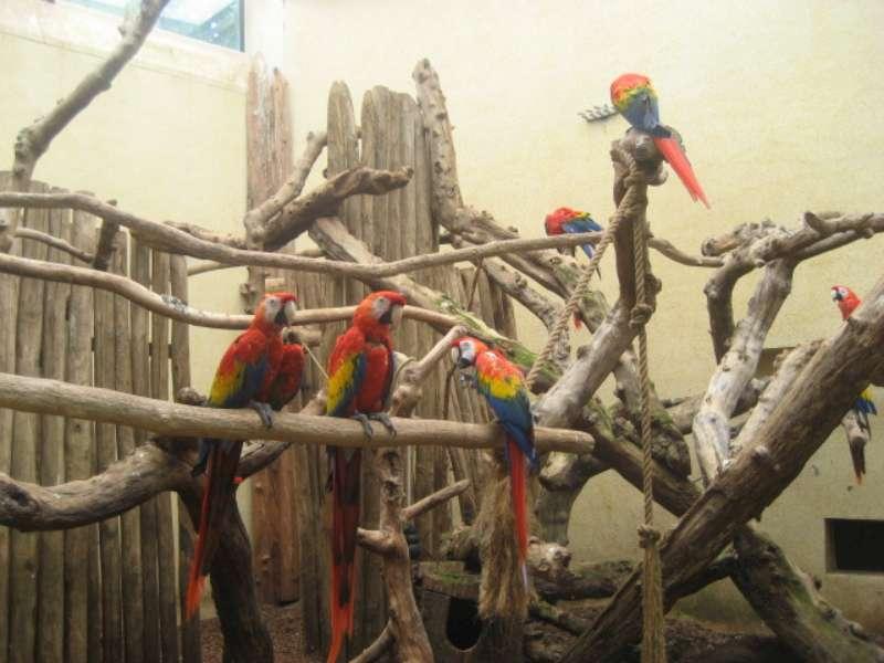 Papegaai Ouwehands Dierenpark Rhenen 800