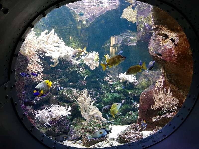 Aquarium Pairi Daiza
