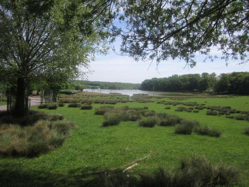 overzicht_bos_Parc_Aimalier_Sainte_Croix