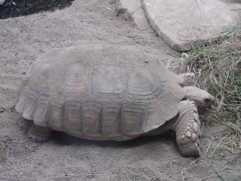Schildpad Parc Merveilleux