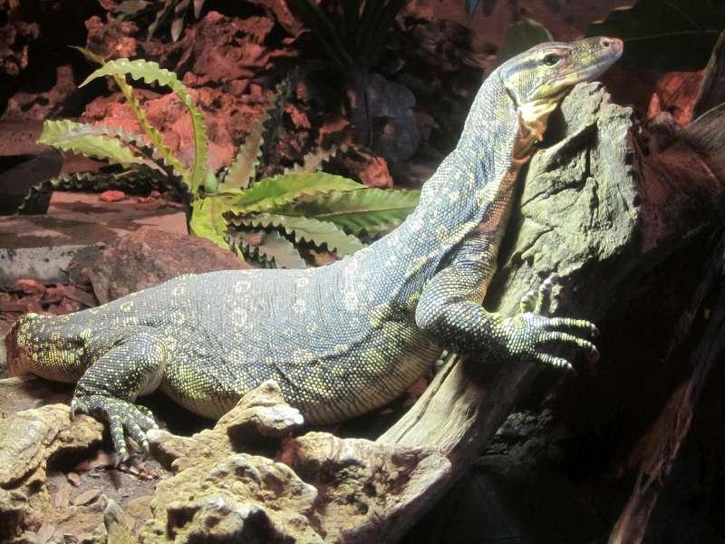 Reptiel Reptielenhuis De Aarde