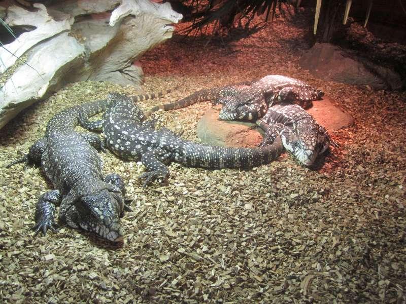 Reptielen Reptielenhuis De Aarde