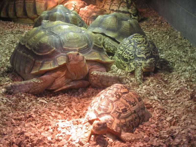 Schildpad Reptielenhuis De Aarde