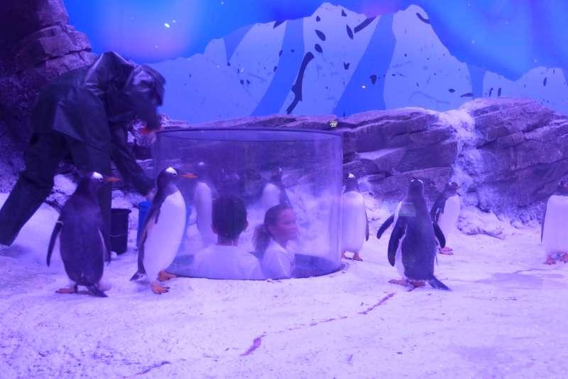 pinguin_verblijf_Sea_Life_Val_dEurope
