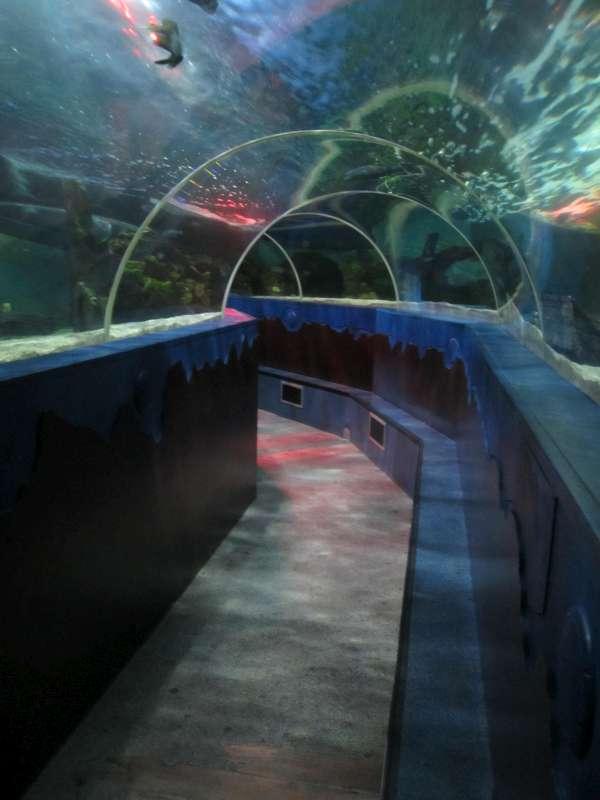 Water Tunnel Sea Life Scheveningen