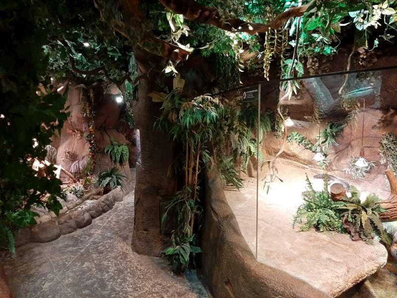 Jungle 1 Serpentarium