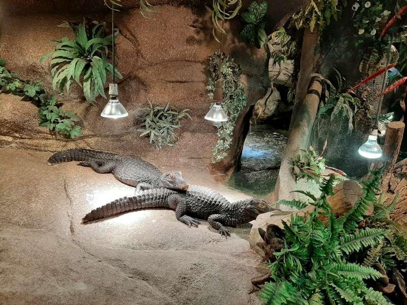 Kaaiman Serpentarium