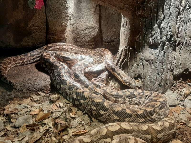 Python Serpentarium