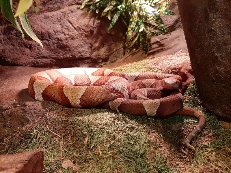 Slang 1 Serpentarium