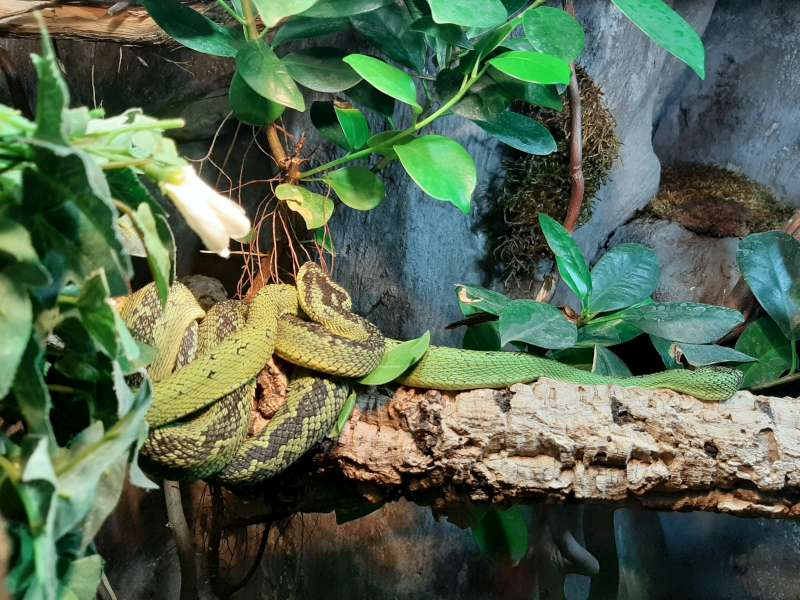 Slang 2 Serpentarium