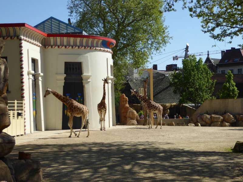 Giraffen Zoo Antwerpen