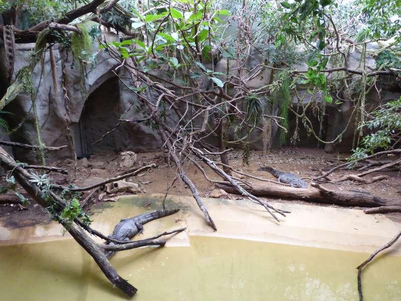 Krokodillen Zoo Antwerpen