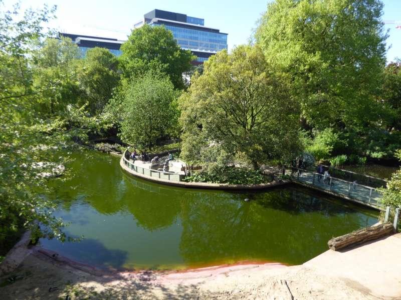 Nijlpaarden Vijver Zoo Antwerpen