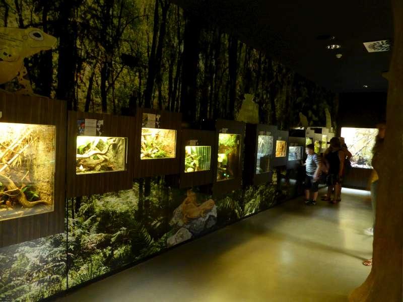 Reptielen Gebouw Zoo Antwerpen