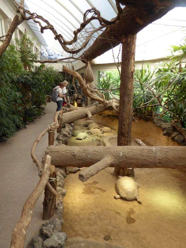 Reptielen Vrij Zoo Antwerpen2