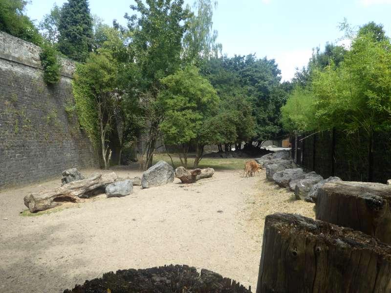 Zoo de Maubeuge dieren