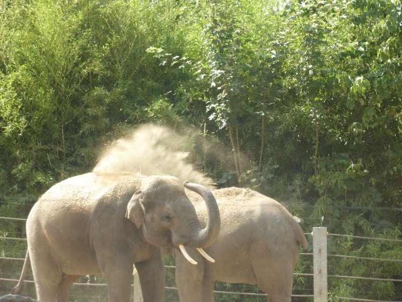 Zoo de Maubeuge olifanten